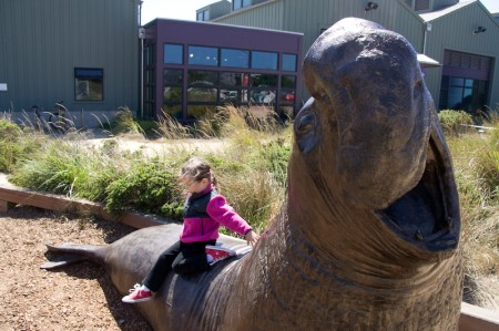 Erin's dismount from elephant seal.